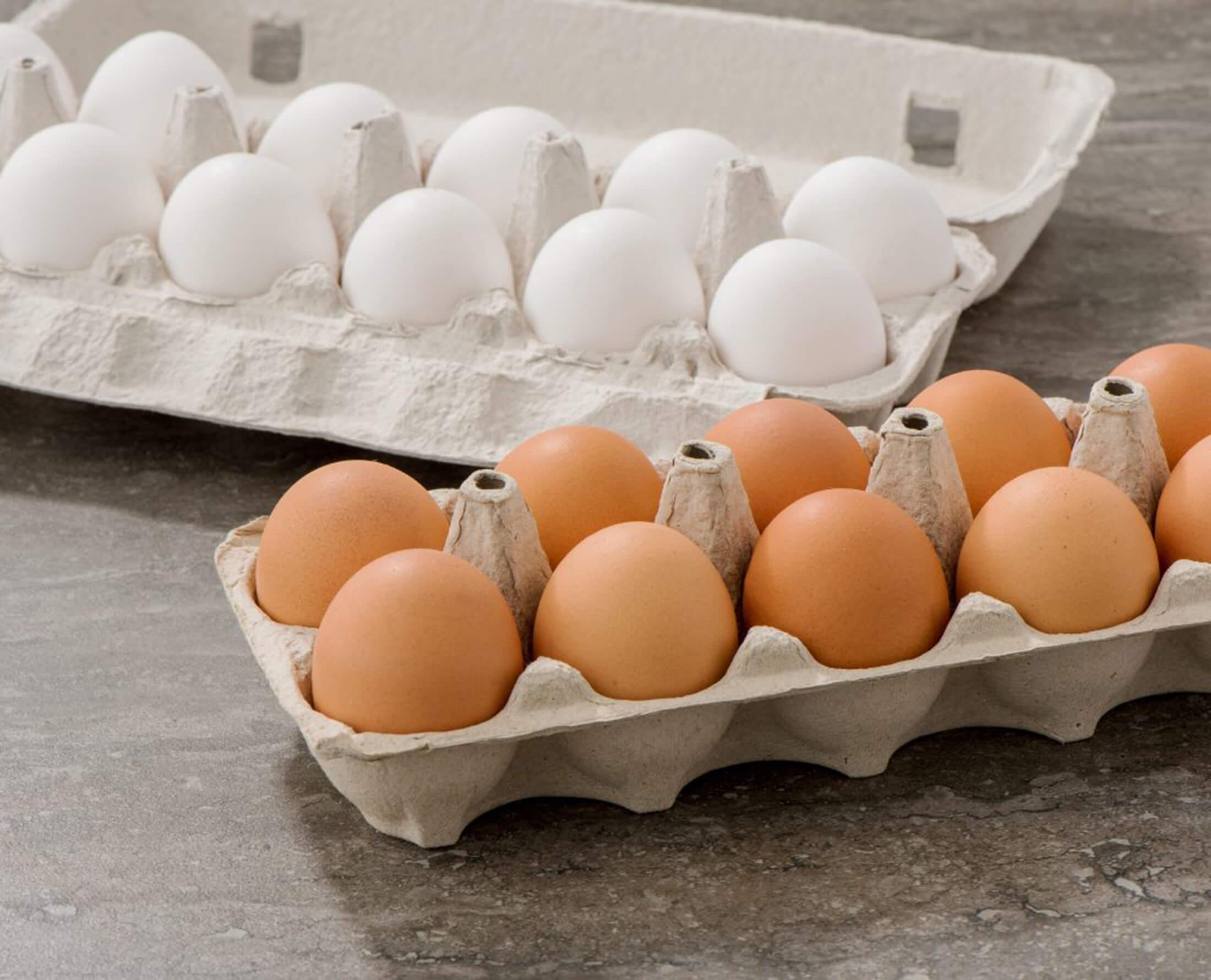 تخم+مرغ
