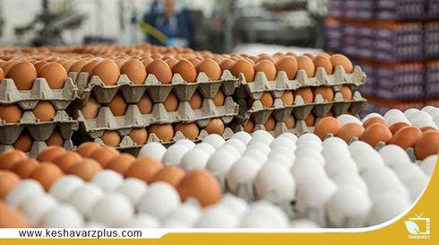 مشکلات تولیدکنندگان تخم مرغ