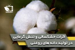 اثرات خشکسالی و تنش گرمایی در تولید دانه های روغنی(انبه)