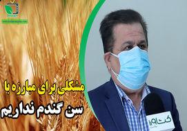 گفتگوی اختصاصی با چنگلوایی رییس سازمان حفظ نباتات در رابطه با اخرین وضعیت سن گندم در کشور