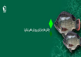 پرونده ویژه/ چالش ها و مزایای پرورش ماهی تیلاپیا در ایران